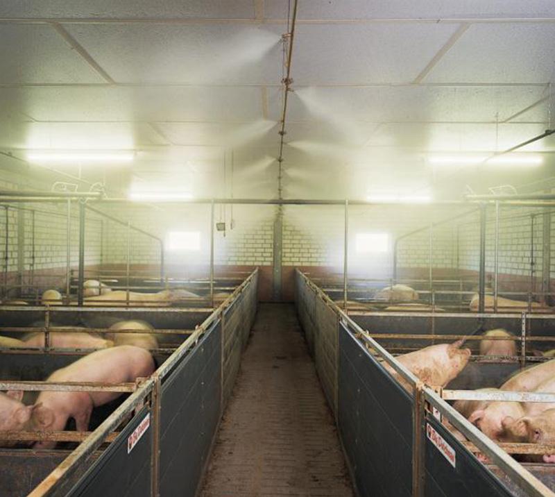 猪舍喷雾消毒设备安装