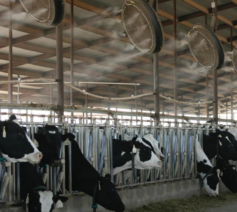 养殖场自动喷雾消毒设备安装
